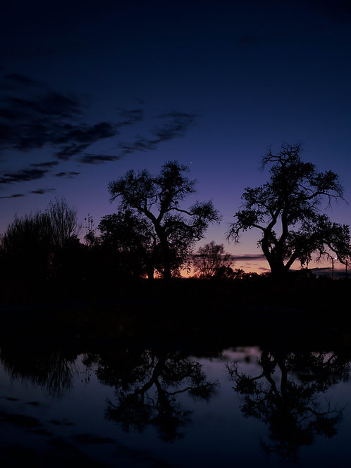 Reflections On The Bosque