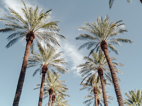 Palms - Photo Print