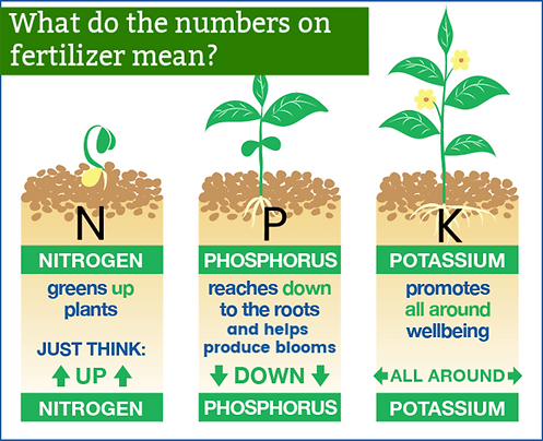 N-P-K-Fertilizer-Benefit-Plants