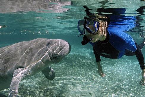 swim+with+manatee+crystal+river