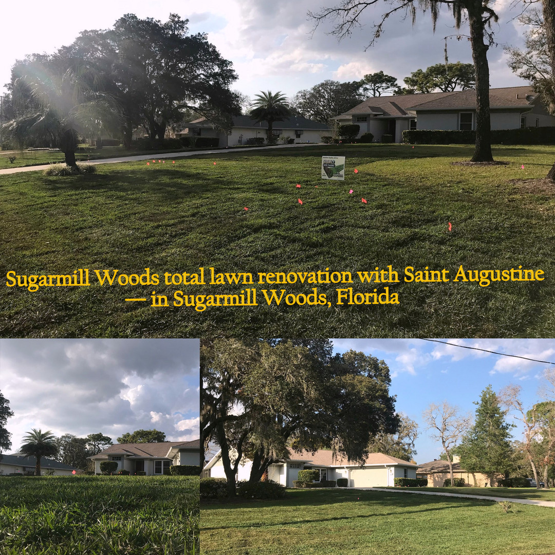 Sugarmill_Woods_total_lawn_renovation