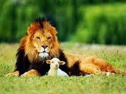 Il leone che diventò una pecora