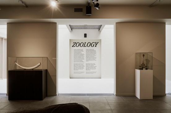 Zoology © Dirk Pauwels