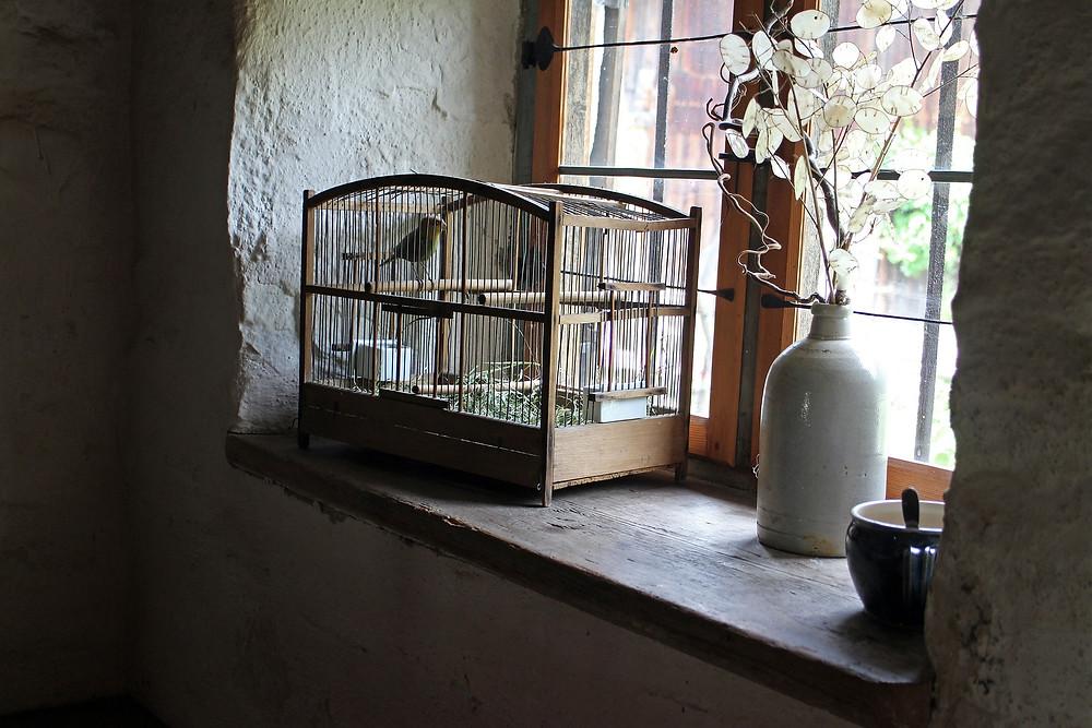 כלוב ציפור האושר