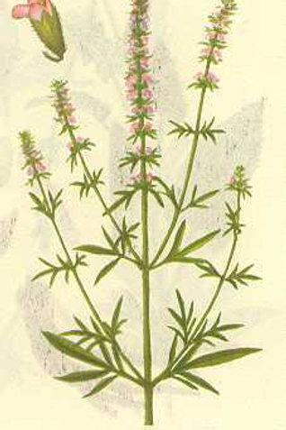 Schizonepetae Herba (Jing Jie)