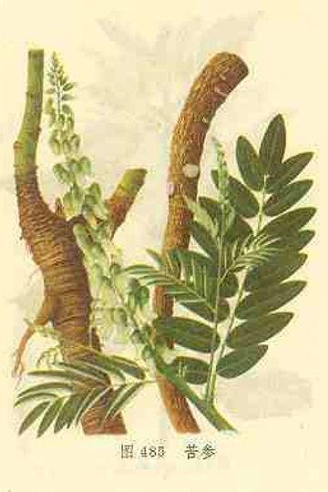 Sophorae Radix (Ku Shen)