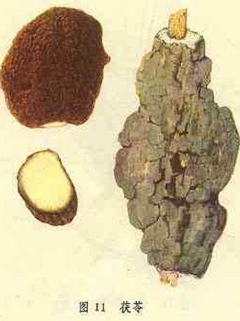 Poria Cocos (Fu Ling)