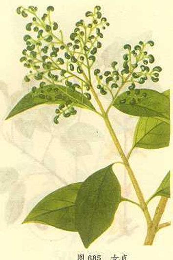 Ligustri Lucidi Frutus (Nv Zhen Zi)