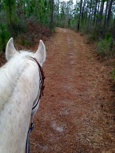 Equestrian Trail 2