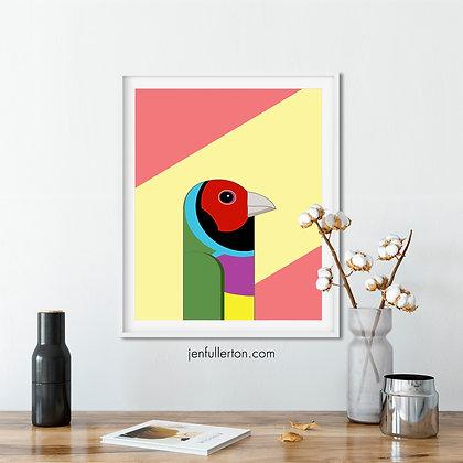 Gouldian Finch – Australian bird