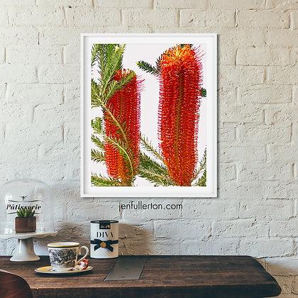 Banksia – digital watercolour flowers