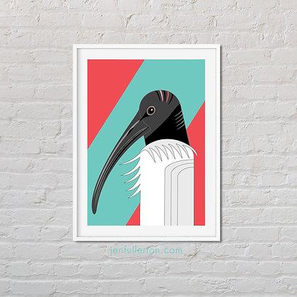 White ibis print – native Australian bird art