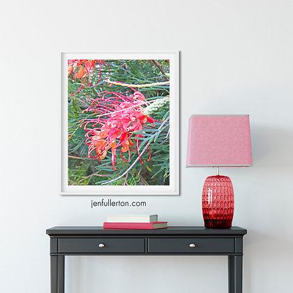 Grevillea – digital watercolour flower