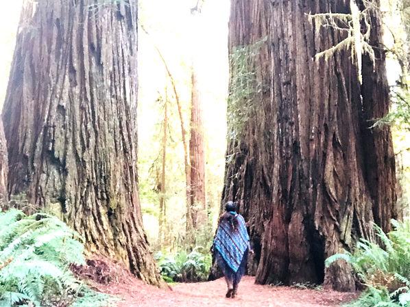 tree walk_edited.jpg