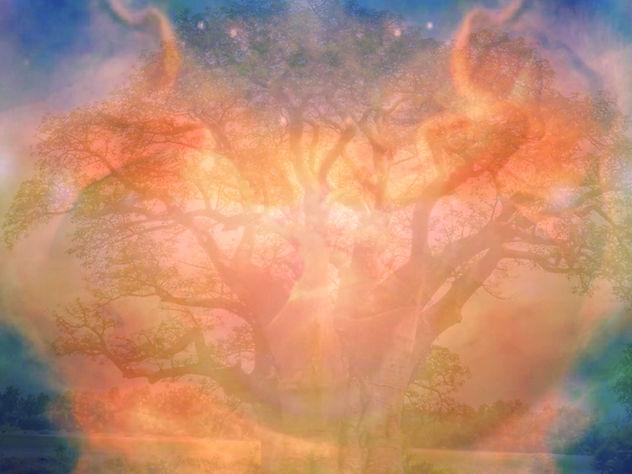 fetus tree.jpg
