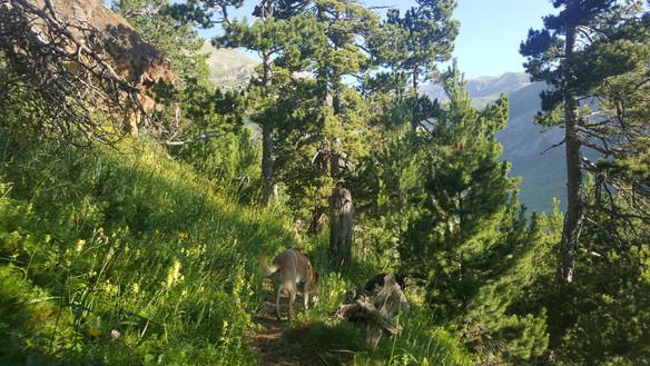 Wanderlust Pyrenäen