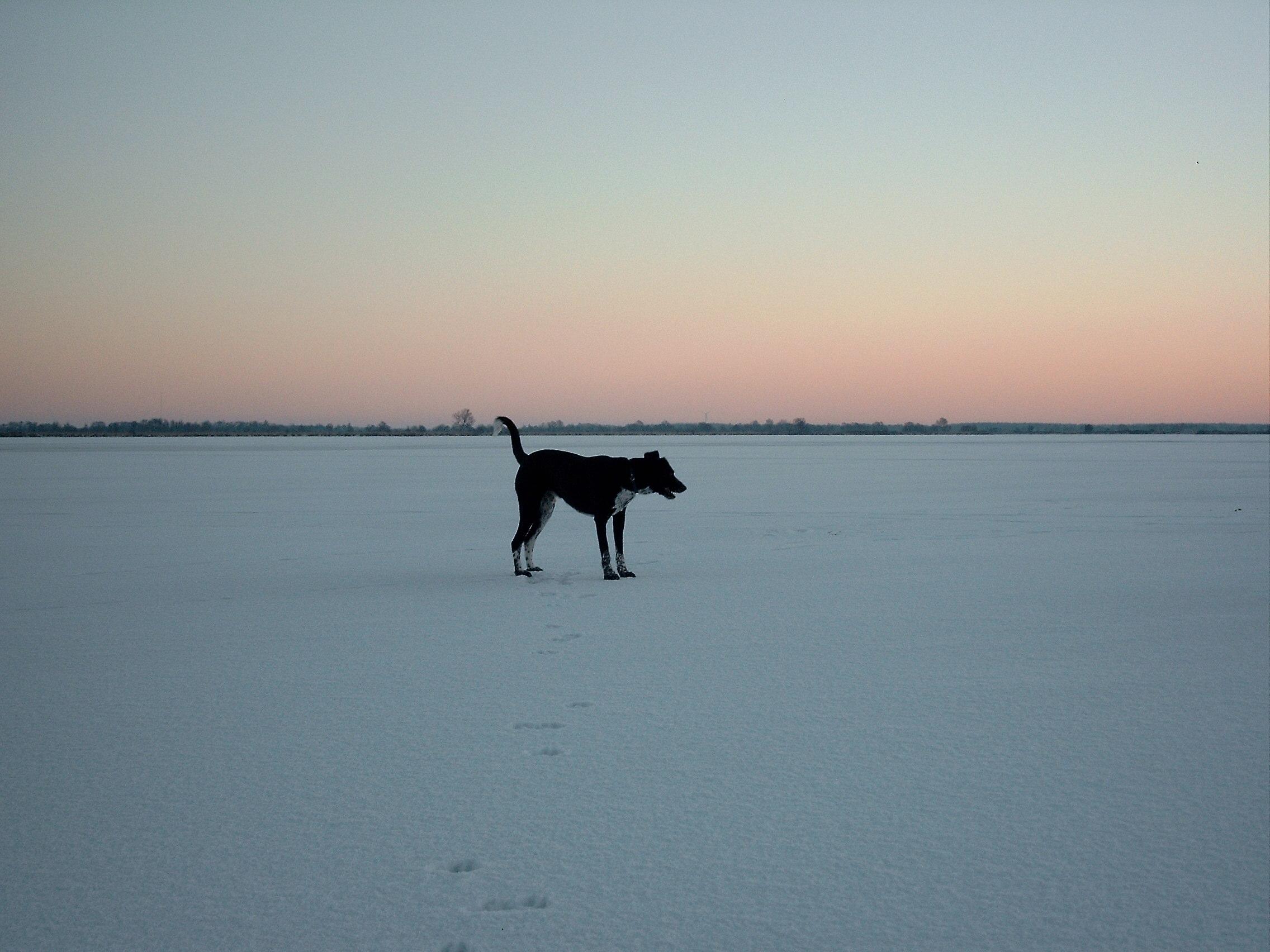 Balou auf dem Eis