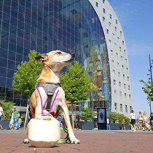 Reiseblog Roterdam