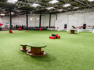 """Action Petz"", UK's erster Indoor Dog Park!"