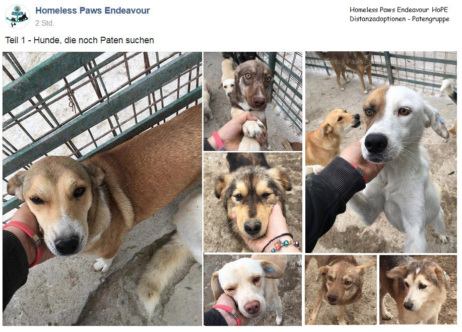 Homeless Paws Endeavour