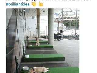 Hundeparkplätze bei IKEA