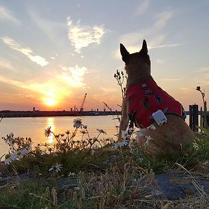 Reiseblog Ijsselmeer