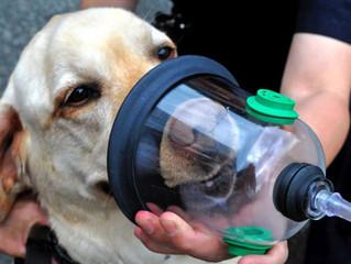 Pet Oxygen Masken