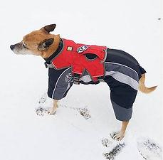 Hundemantel Skianzug maggiandmuesli.JPG