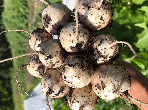 Salad Turnips, certified organic