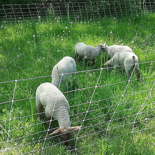 Pastured Lamb, ground