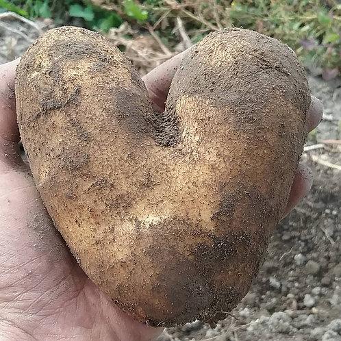 Russet potatoes, certified organic