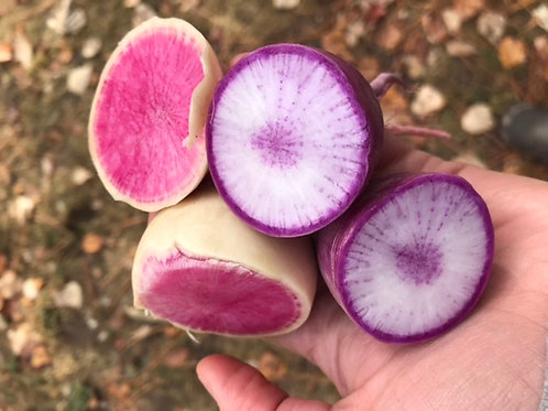 Winter radish, certified organic
