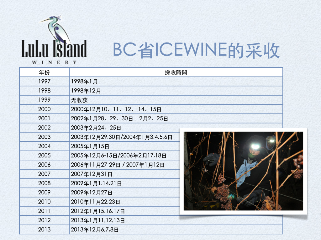 BC省ICEWINE的采收