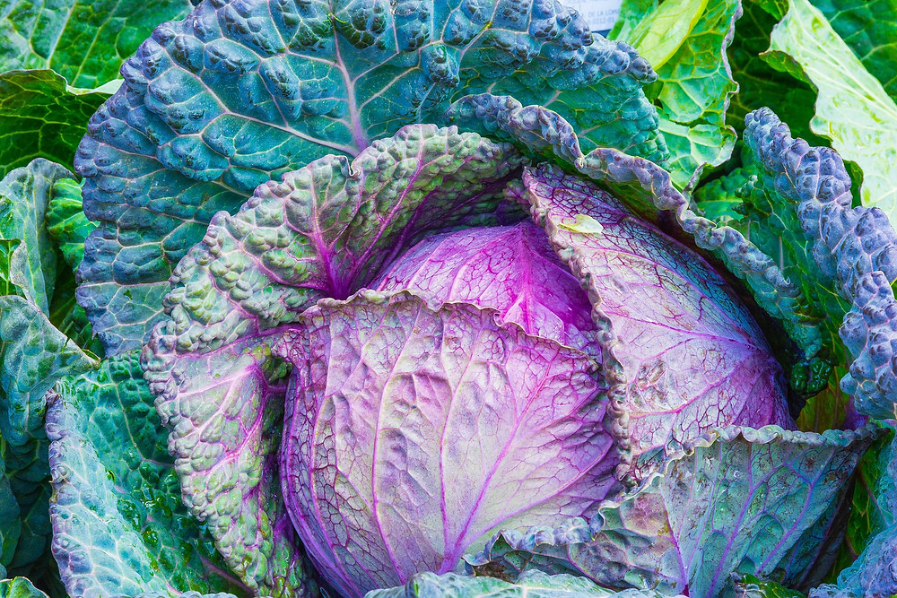 This is a picture of a cabbage. Cabbages are not curious.