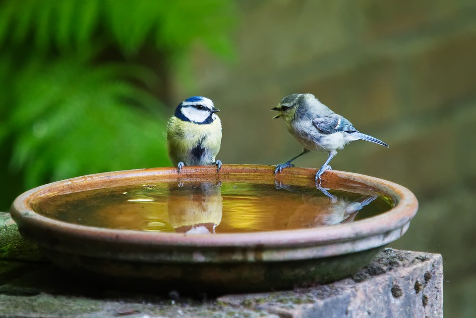 Kenneth J Kiwicz- Listening Quote- 2 Birds Converstation Bird Bath