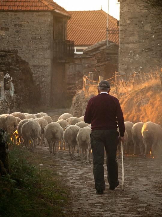 Kenneth J Kiwicz uses a picture of a man herding sheep to illustrate the concept of leading from behind.