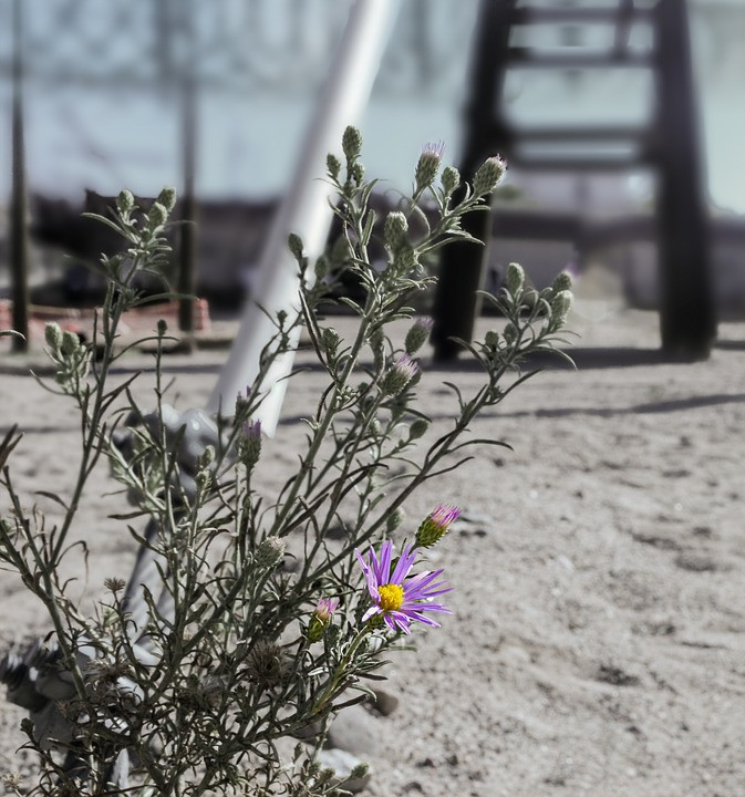 A beautiful flower is growing on a plant in a construction site in a desert