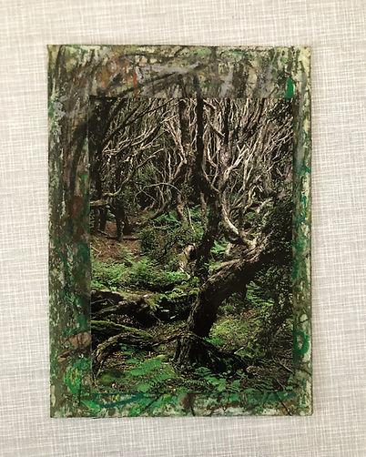 Wald No1.JPG