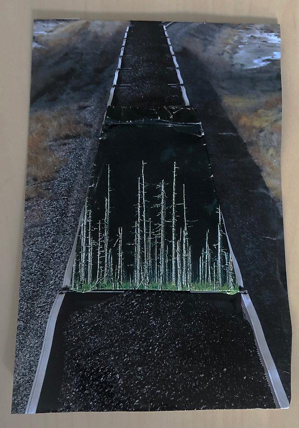 foresttrain.jpg
