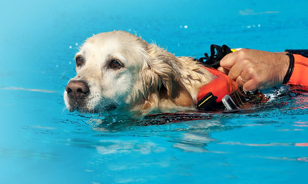 Hydrotherapy-in-Dogs.jpg