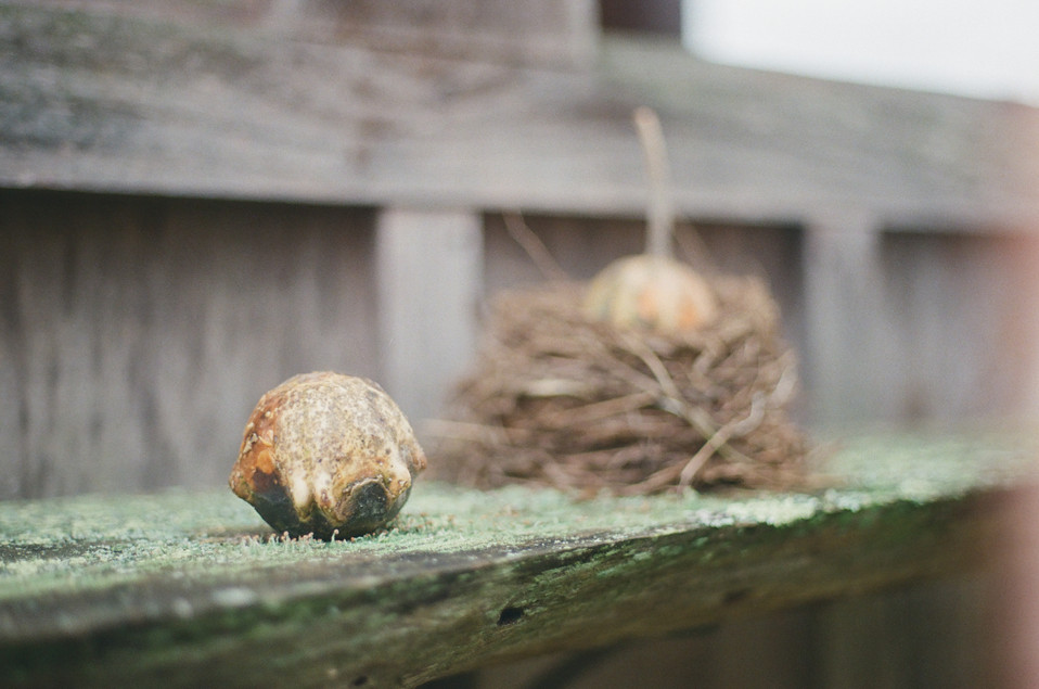 Gourd and Nest 2