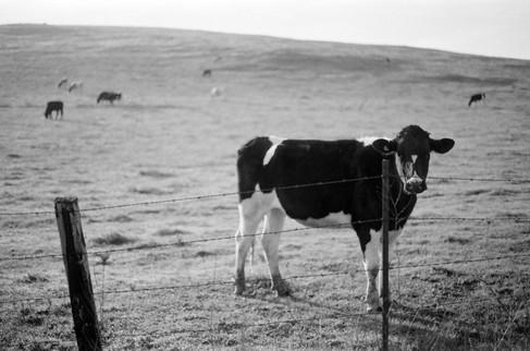 Happy Cow in California