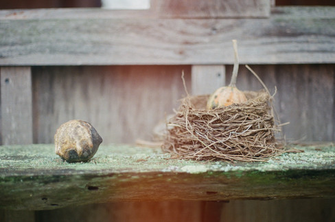 Gourd and Nest 1