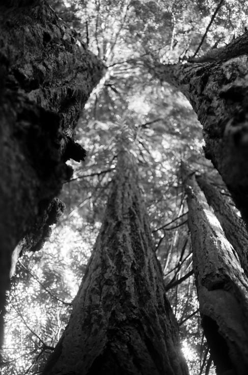 Redwood National Park, CA.jpg