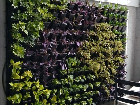 Vertical garden services in pune