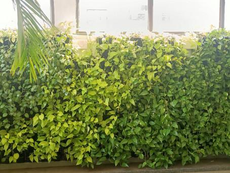 Vertical Garden Service in Pune !