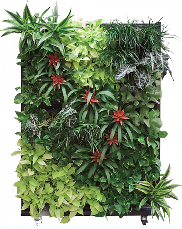 green-wall-png-2.png