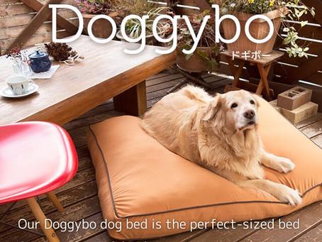 Doggybo当たります!