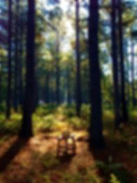 Honey Creek Woodlands | Green Burial