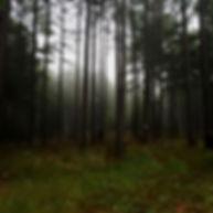 Honey Creek Woodlands | Pines
